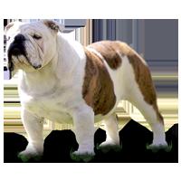 bulldogs, bulldog, bulldogs inglés, bulldog ingles, bulldogs frances, bulldog frances, semental bulldog, bulldogs sementales, sementales de bulldogs, cachorros de bulldog, cachorro de bulldog, criadero de bulldog, criadero de bulldogs, cahorros de bulldogs, cachorros de bulldogs en venta, cachorros de bulldog en venta, cachorro de bulldog en venta, cachorros de bulldogs ingles, cachorros de bulldogs frances, cachorros de bulldogs ingles en venta, cachorros de bulldogs frances en venta, renta de bulldogs sementales, renta de sementales de bulldogs, semental bulldog ingles, bulldogs ingles sementales, sementales de bulldogs ingles, renta de bulldogs ingles sementales, renta de sementales de bulldogs ingles, semental bulldog frances, bulldogs frances sementales, sementales de bulldogs frances, renta de bulldogs frances sementales, renta de sementales de bulldogs frances, bulldogs monterrey, bulldog monterrey, bulldogs inglés monterrey, bulldog ingles monterrey, bulldogs frances monterrey, bulldog frances monterrey, semental bulldog monterrey, bulldogs sementales monterrey, sementales de bulldogs monterrey, cachorros de bulldog monterrey, cachorro de bulldog monterrey, criadero de bulldog monterrey, criadero de bulldogs monterrey, cahorros de bulldogs monterrey, cachorros de bulldogs en venta monterrey, cachorros de bulldog en venta monterrey, cachorro de bulldog en venta monterrey, cachorros de bulldogs ingles monterrey, cachorros de bulldogs frances monterrey, cachorros de bulldogs ingles en venta monterrey, cachorros de bulldogs frances en venta monterrey, renta de bulldogs sementales monterrey, renta de sementales de bulldogs monterrey, semental bulldog ingles monterrey, bulldogs ingles sementales monterrey, sementales de bulldogs ingles monterrey, renta de bulldogs ingles sementales monterrey, renta de sementales de bulldogs ingles monterrey, semental bulldog frances monterrey, bulldogs frances sementales monterrey, sementales de bulldogs frances monterrey, renta d